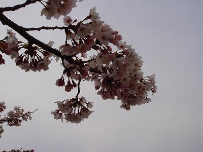 miyoshi 002.jpg