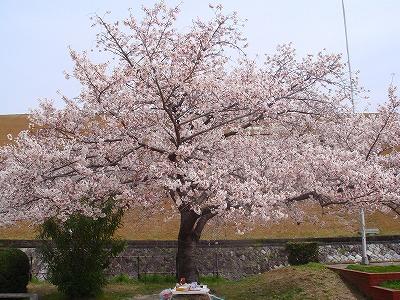 miyoshi 005.jpg